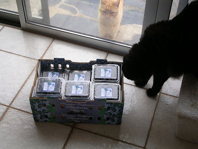 blueberry crates and cats