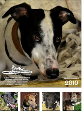 greyhound rescue calendar