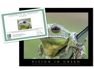 adopt a frog