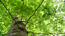 Stand Tall Vivid Green Tree