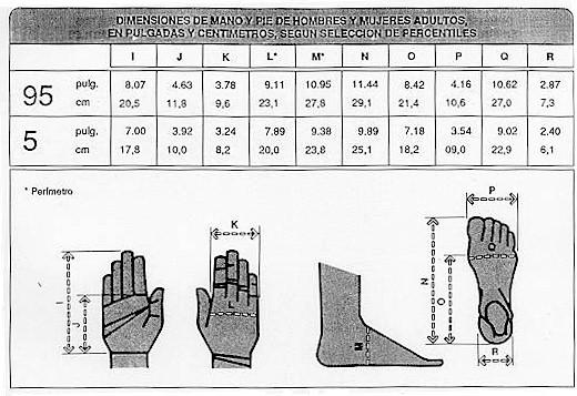 Saber sena antropometr a for Cuales son medidas antropometricas