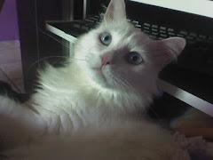 Gato Escritor