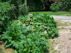 SQUASH PATCH