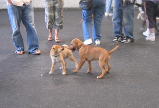 Rover Dog Sitting Service