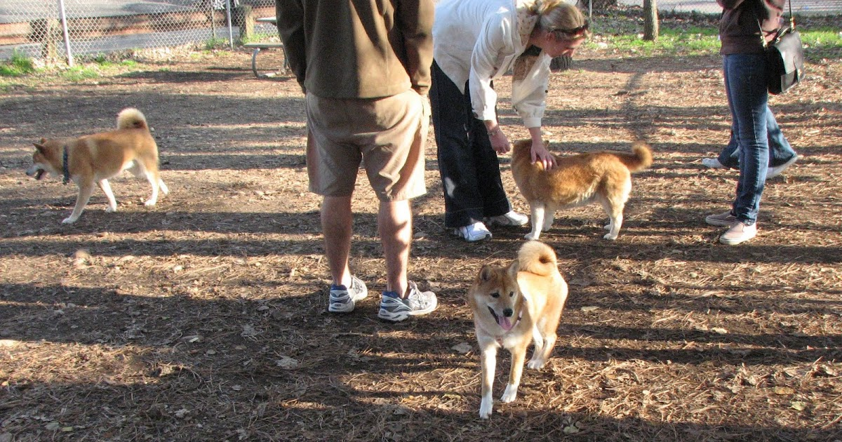Dog Petting Places Near Me