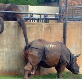 hi ke elefantttttt