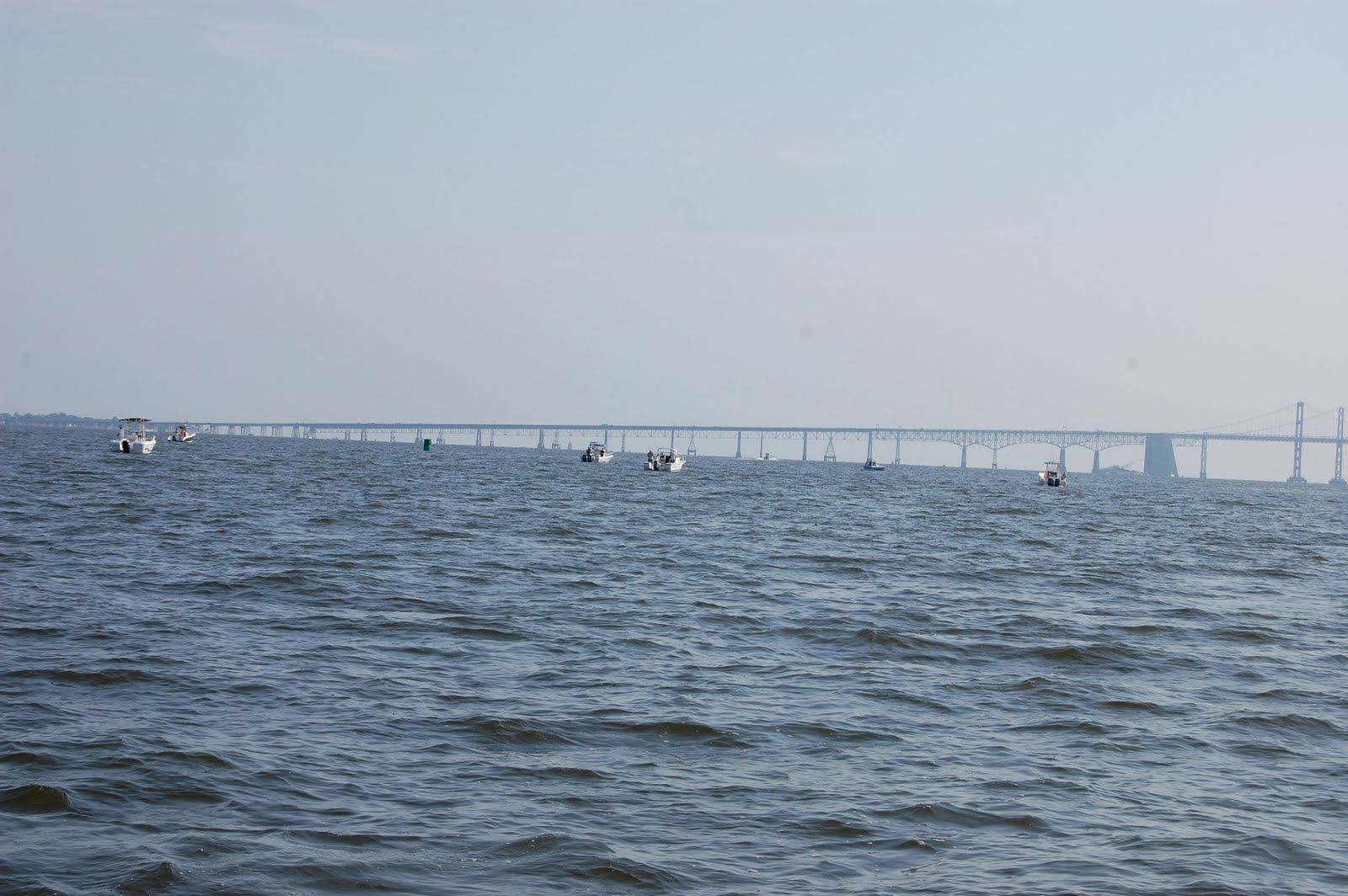 Chesapeake bay fly fishing back in action for Chesapeake bay fishing