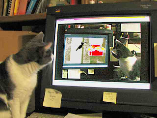 Spackle Watches Spackle Hunting Video Hummingbird (c) David Ocker