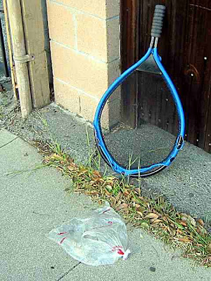 leaning blue racket
