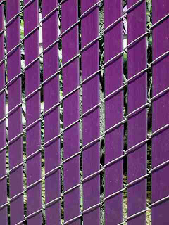 Behind the purple fence (c) David Ocker