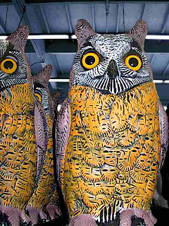 Scary Owls (c) David Ocker