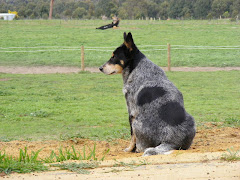 and last but certainly not least...the ever faithful Oakey overlooking her domain :)