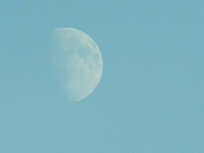 photograph of moon in a winter sky