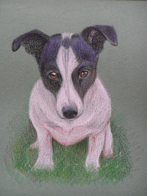 prismacolor drawing of Jack Russell
