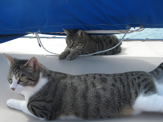 Willow & Buffy, ship's cats on So It Goes, CAL-34 sailboat