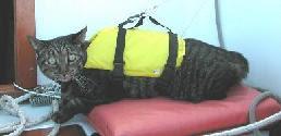 Ships Cat Bree, of Lealea