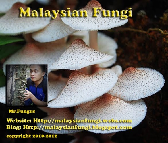 Malaysian Fungi