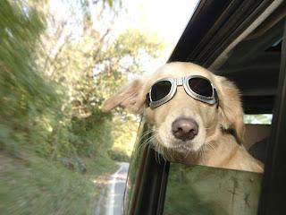 Cão e automóvel – Parte 1