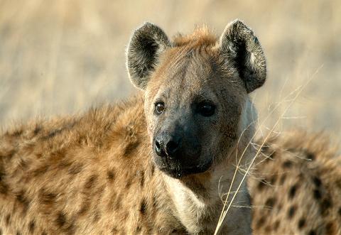 imagenes de animales carnivoros y herbivoros - los animales terrestres la ciencia de los animales
