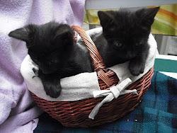 2 petits chatons