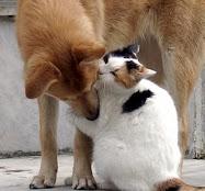 Clique: Pela aprovação do Código Federal de Bem-Estar Animal