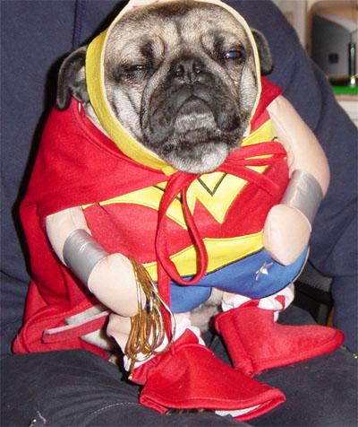 cachorro dor tosco ridiculo mulher maravilha