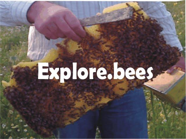 explore.bees