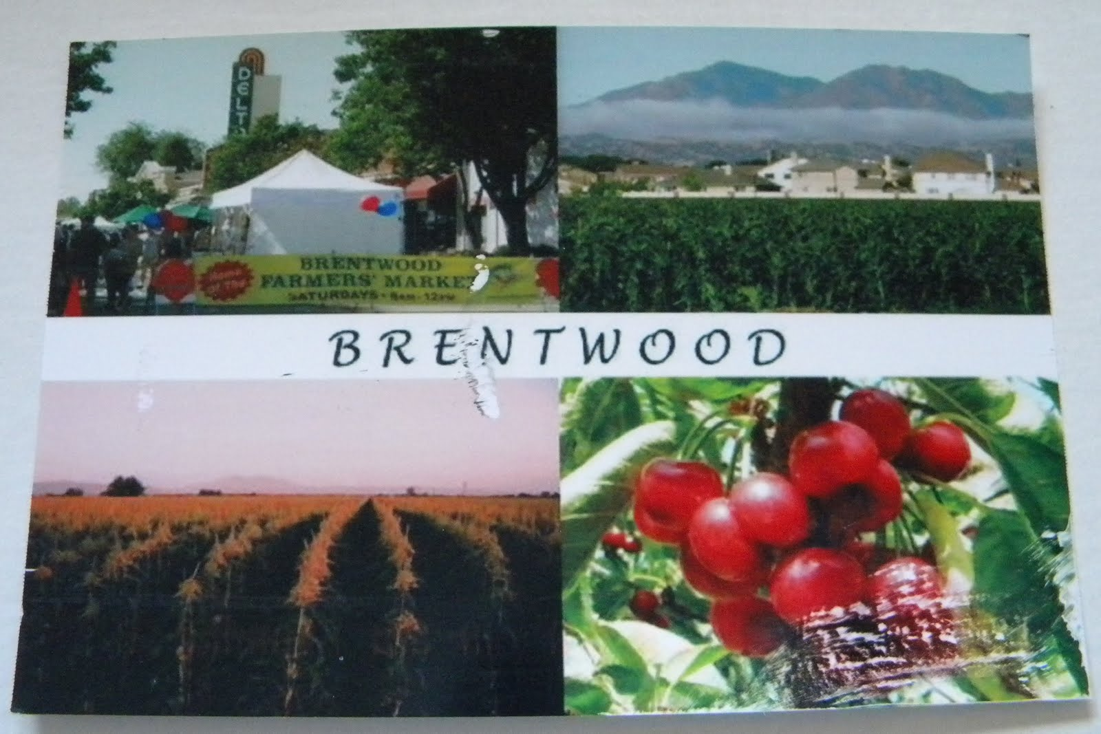 California postcard dreaming brentwood california for The brentwood