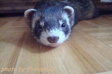 Fred the Ferret