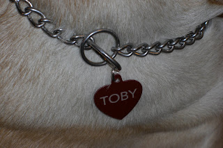Close up picture of Toby's chain collar with his new red heart tag, you can see his name on the tag