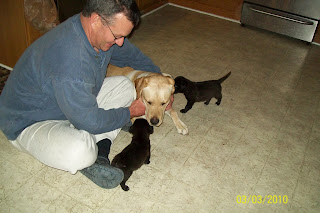 Photo of Toby laying down, with the father of the puppy swap family - Toby is meeting the 2 little black puppies