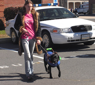 Photo of Duchess & I walking, the police car is right behind us, and she is wearing her coat/harness