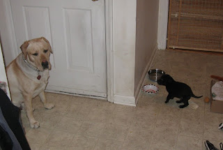 Picture of Toby sitting in the room - watching the cute little pups