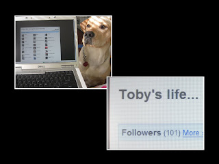 Photo layout of 2 pictures - first one is of Toby's head beside my laptop - the site that's opened is his follower page for his blog, the second picture is a close up of some of Toby's blog name (Toby's life...) and shows that he has 101 followers)