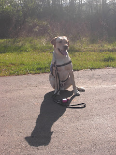 Picture of Toby in a sit-stay in coat, you can see his shadow in front of him. Toby is also smiling!