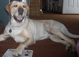 Full view picture of Toby, his paw is on the stone where his paw print was made, and he is looking at the camera