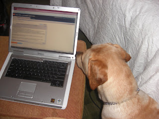 Picture of Toby's head beside my laptop, on the screen is this post - his LAST POST