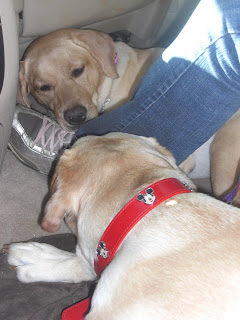 Picture of Toby & Cassie in the car - both sleeping