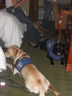 Picture of all 3 dogs in coat, in a down, in our hotel room