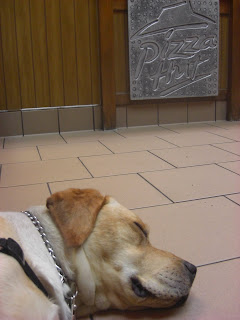 Picture of Toby sleeping inside Pizza hut, in the right corner you can see the Pizza hut sign