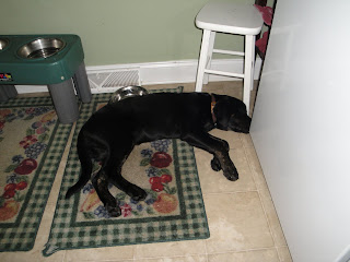 Photo of Rudy sleeping in the laundry room - where he gets fed