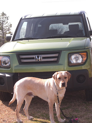 Picture of Toby (my last puppy I raised) in a stand-stay in front of the green Element