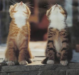 http://4.bp.blogspot.com/_ttWafcua1NM/TTH-AQaID1I/AAAAAAAAAGE/4bNffIAuJ7g/s1600/heavyloaduk_two-cute-kittens.jpg