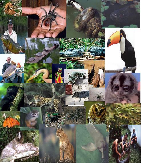 Fauna colombiana taringa for Actividad de perros en el jardin botanico de caguas