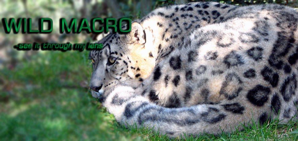 wild macro
