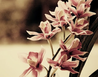 Fine art photograph of pink and white flowers by Christina Perdue