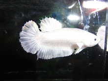 HMPK white platinum female