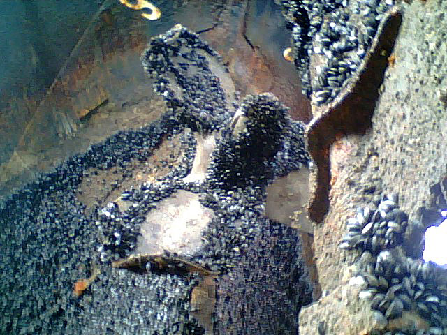 [0119070904+prop+w-mussels.jpg]