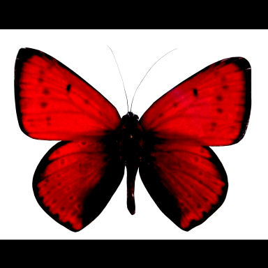 red butterfly feature