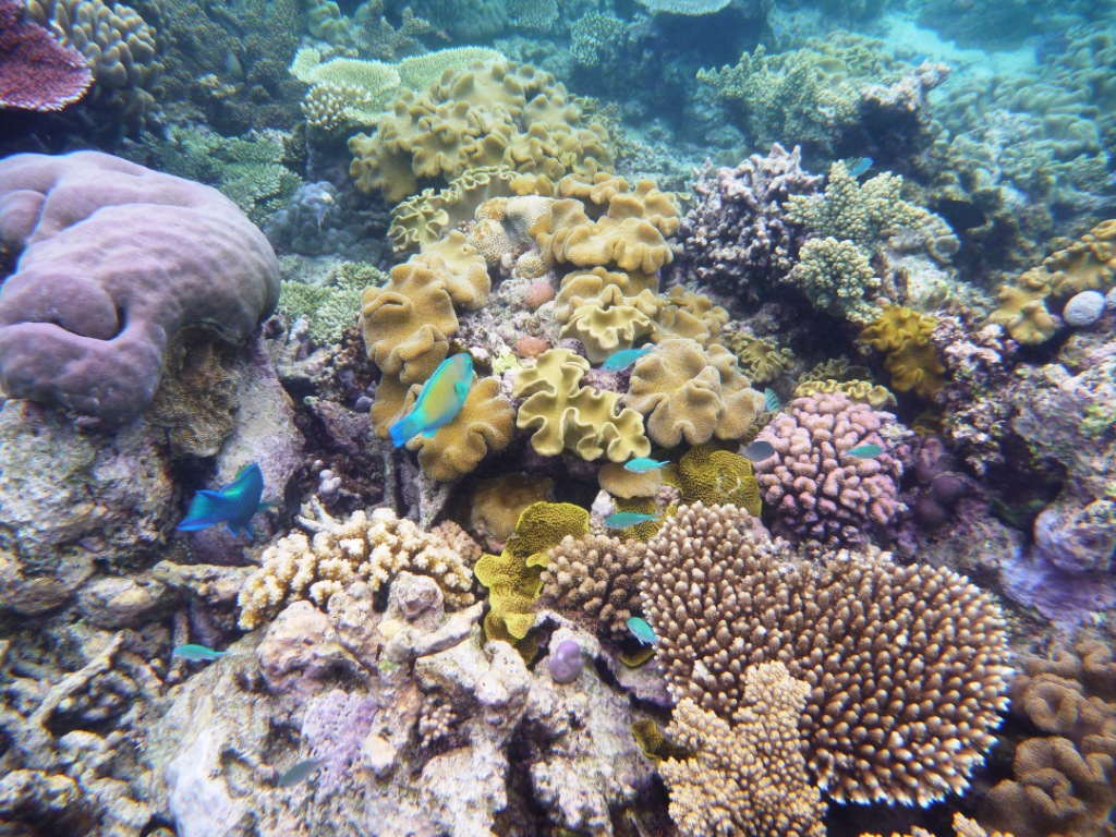 Ironman 101 great barrier reef for Saltwater reef fish